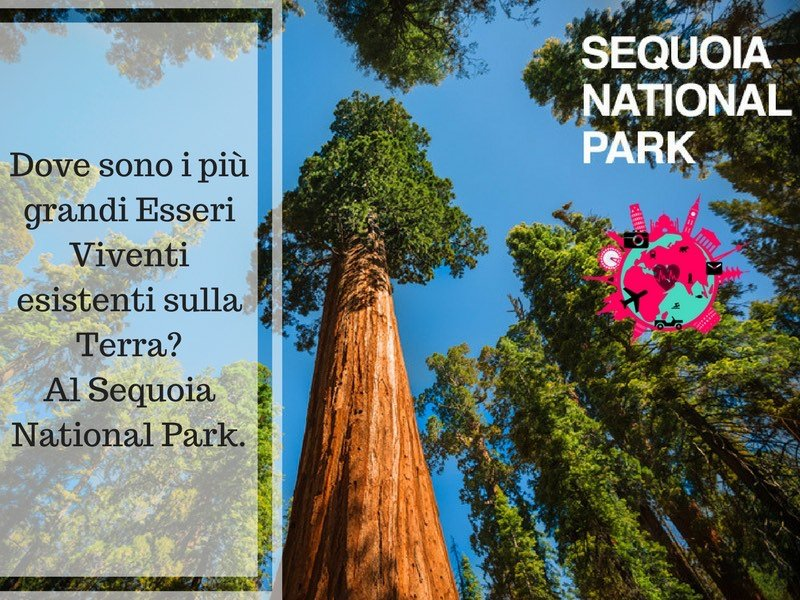 Dove sono i più grandi Esseri Viventi esistenti sulla Terra? Al Sequoia National Park